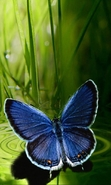 Download free mobile wallpaper 29405: Butterflies,Insects for phone or tab. Download images, backgrounds and wallpapers for mobile phone for free.