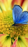Download free mobile wallpaper 33072: Butterflies,Insects for phone or tab. Download images, backgrounds and wallpapers for mobile phone for free.