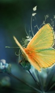 Download free Insects wallpapers for mobile phone.