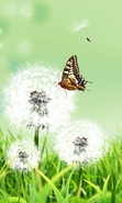 Download free mobile wallpaper 36582: Butterflies,Insects,Pictures for phone or tab. Download images, backgrounds and wallpapers for mobile phone for free.