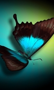 Download free mobile wallpaper 46903: Butterflies,Insects,Pictures for phone or tab. Download images, backgrounds and wallpapers for mobile phone for free.