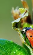 Download free mobile wallpaper 19813: Ladybugs, Drops, Insects for phone or tab. Download images, backgrounds and wallpapers for mobile phone for free.