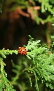 Download free mobile wallpaper 10552: Insects, Ladybugs for phone or tab. Download images, backgrounds and wallpapers for mobile phone for free.