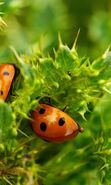 Download free mobile wallpaper 27847: Ladybugs, Insects for phone or tab. Download images, backgrounds and wallpapers for mobile phone for free.