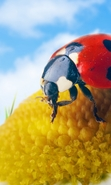 Download free mobile wallpaper 30170: Ladybugs,Insects for phone or tab. Download images, backgrounds and wallpapers for mobile phone for free.