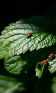 Download free mobile wallpaper 35126: Ladybugs,Insects for phone or tab. Download images, backgrounds and wallpapers for mobile phone for free.