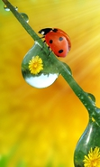 Download free mobile wallpaper 37800: Ladybugs,Insects for phone or tab. Download images, backgrounds and wallpapers for mobile phone for free.