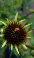 Download free mobile wallpaper 38640: Ladybugs,Insects for phone or tab. Download images, backgrounds and wallpapers for mobile phone for free.