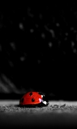 Download free mobile wallpaper 39293: Ladybugs,Insects for phone or tab. Download images, backgrounds and wallpapers for mobile phone for free.