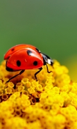 Download free mobile wallpaper 40791: Ladybugs,Insects for phone or tab. Download images, backgrounds and wallpapers for mobile phone for free.