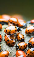 Download free mobile wallpaper 4504: Insects, Ladybugs for phone or tab. Download images, backgrounds and wallpapers for mobile phone for free.