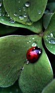 Download free mobile wallpaper 49278: Ladybugs,Insects for phone or tab. Download images, backgrounds and wallpapers for mobile phone for free.