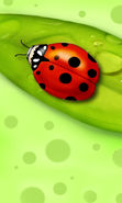 Download free mobile wallpaper 13374: Ladybugs, Insects, Pictures for phone or tab. Download images, backgrounds and wallpapers for mobile phone for free.
