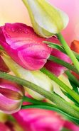 Download free mobile wallpaper 20894: Bouquets, Flowers, Drops, Plants, Tulips for phone or tab. Download images, backgrounds and wallpapers for mobile phone for free.