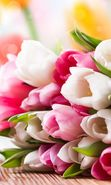 Download free mobile wallpaper 20314: Bouquets, Flowers, Plants, Tulips for phone or tab. Download images, backgrounds and wallpapers for mobile phone for free.