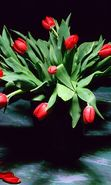 Download free mobile wallpaper 27630: Bouquets, Flowers, Plants, Tulips for phone or tab. Download images, backgrounds and wallpapers for mobile phone for free.