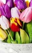 Download free mobile wallpaper 38651: Bouquets,Flowers,Plants,Tulips for phone or tab. Download images, backgrounds and wallpapers for mobile phone for free.