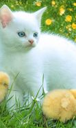 Download free mobile wallpaper 220: Animals, Cats, Birds, Grass, Chicks for phone or tab. Download images, backgrounds and wallpapers for mobile phone for free.