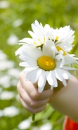 Download free mobile wallpaper 48085: Flowers,Children,People,Plants,Camomile for phone or tab. Download images, backgrounds and wallpapers for mobile phone for free.