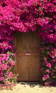 Download free mobile wallpaper 23270: Flowers, Houses, Landscape, Plants for phone or tab. Download images, backgrounds and wallpapers for mobile phone for free.