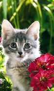 Download free mobile wallpaper 2904: Animals, Plants, Cats, Flowers for phone or tab. Download images, backgrounds and wallpapers for mobile phone for free.