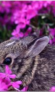 Download free mobile wallpaper 16989: Flowers, Rabbits, Animals for phone or tab. Download images, backgrounds and wallpapers for mobile phone for free.