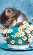 Download free mobile wallpaper 45099: Flowers,Cats,Animals for phone or tab. Download images, backgrounds and wallpapers for mobile phone for free.