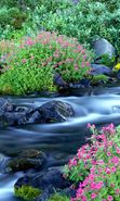 Download free mobile wallpaper 11096: Plants, Landscape, Flowers, Rivers for phone or tab. Download images, backgrounds and wallpapers for mobile phone for free.