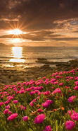 Download free mobile wallpaper 12077: Plants, Landscape, Flowers, Sunset, Sun for phone or tab. Download images, backgrounds and wallpapers for mobile phone for free.