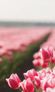 Download free mobile wallpaper 12436: Flowers, Landscape, Plants, Tulips for phone or tab. Download images, backgrounds and wallpapers for mobile phone for free.