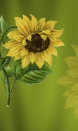 Download free mobile wallpaper 31537: Flowers,Sunflowers,Pictures for phone or tab. Download images, backgrounds and wallpapers for mobile phone for free.