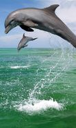 Download free mobile wallpaper 4814: Animals, Water, Dolfins, Sea for phone or tab. Download images, backgrounds and wallpapers for mobile phone for free.