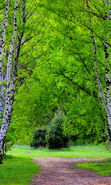 Download free mobile wallpaper 22360: Trees, Roads, Birches, Landscape for phone or tab. Download images, backgrounds and wallpapers for mobile phone for free.