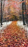 Download free mobile wallpaper 20690: Trees, Roads, Leaves, Autumn, Landscape for phone or tab. Download images, backgrounds and wallpapers for mobile phone for free.