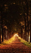 Download free mobile wallpaper 15562: Trees, Roads, Autumn, Nature for phone or tab. Download images, backgrounds and wallpapers for mobile phone for free.