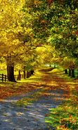 Download free mobile wallpaper 21451: Trees, Roads, Autumn, Landscape for phone or tab. Download images, backgrounds and wallpapers for mobile phone for free.