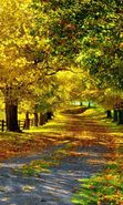 Download free mobile wallpaper 21764: Trees, Roads, Autumn, Landscape for phone or tab. Download images, backgrounds and wallpapers for mobile phone for free.