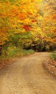Download free mobile wallpaper 24259: Trees, Roads, Autumn, Landscape for phone or tab. Download images, backgrounds and wallpapers for mobile phone for free.