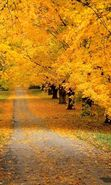 Download free mobile wallpaper 25255: Trees, Roads, Autumn, Landscape for phone or tab. Download images, backgrounds and wallpapers for mobile phone for free.