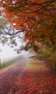Download free mobile wallpaper 30481: Trees,Roads,Autumn,Landscape for phone or tab. Download images, backgrounds and wallpapers for mobile phone for free.