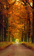 Download free mobile wallpaper 31124: Trees,Roads,Autumn,Landscape for phone or tab. Download images, backgrounds and wallpapers for mobile phone for free.
