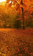 Download free mobile wallpaper 3463: Landscape, Trees, Roads, Autumn for phone or tab. Download images, backgrounds and wallpapers for mobile phone for free.