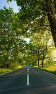 Download free mobile wallpaper 12291: Landscape, Trees, Roads for phone or tab. Download images, backgrounds and wallpapers for mobile phone for free.