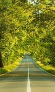Download free mobile wallpaper 20330: Trees, Roads, Landscape for phone or tab. Download images, backgrounds and wallpapers for mobile phone for free.