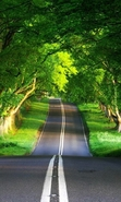 Download free mobile wallpaper 41048: Trees,Roads,Landscape for phone or tab. Download images, backgrounds and wallpapers for mobile phone for free.