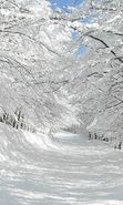 Download free mobile wallpaper 23021: Trees, Roads, Landscape, Snow for phone or tab. Download images, backgrounds and wallpapers for mobile phone for free.