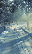 Download free mobile wallpaper 22429: Trees, Roads, Landscape, Snow, Winter for phone or tab. Download images, backgrounds and wallpapers for mobile phone for free.