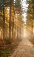 Download free mobile wallpaper 23886: Trees, Roads, Landscape, Sun for phone or tab. Download images, backgrounds and wallpapers for mobile phone for free.