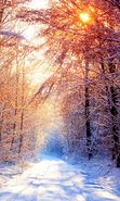 Download free mobile wallpaper 10243: Landscape, Winter, Trees, Roads, Sun for phone or tab. Download images, backgrounds and wallpapers for mobile phone for free.