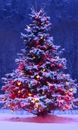 Download free mobile wallpaper 30326: Trees,Fir-trees,New Year,Holidays for phone or tab. Download images, backgrounds and wallpapers for mobile phone for free.